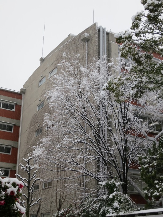 one of many faculty buildings in the main campus with leafless winter trees now decorated by snow ... (photo: henri daros)
